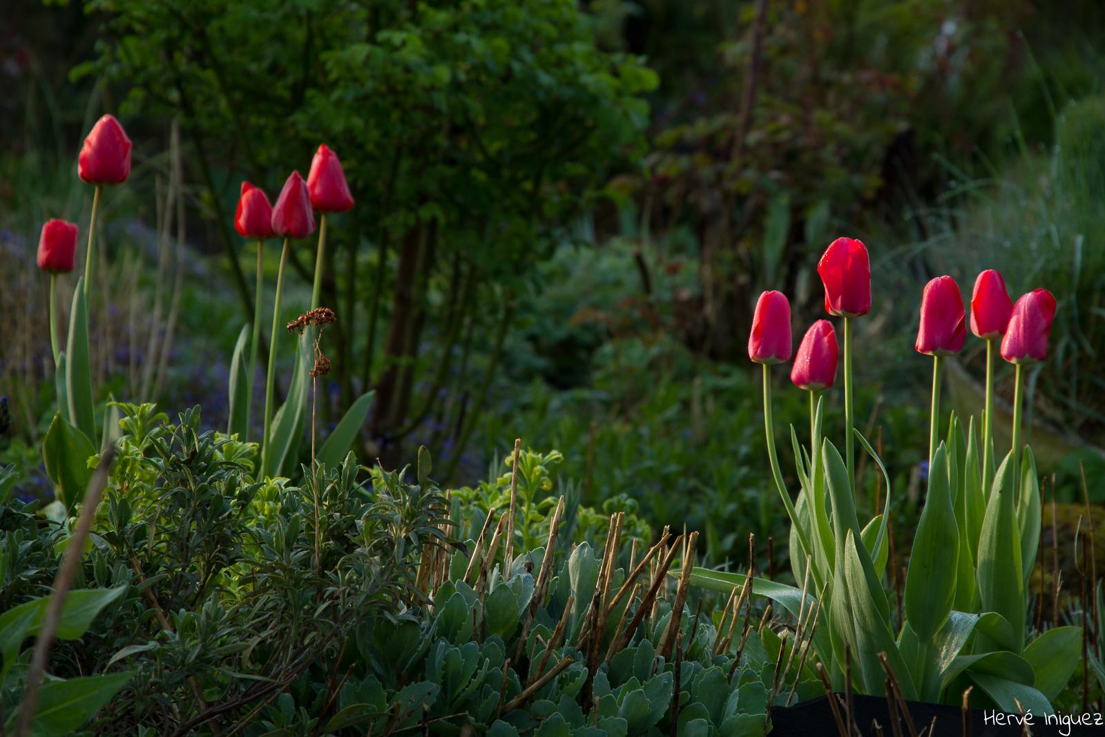 Le jardin du liseron couture sur loir - Comment eradiquer le liseron ...
