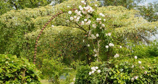 Jardin-de-la-Bellerie-9504
