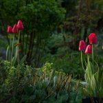 Le jardin du Liseron - Photo Hervé Iniguez